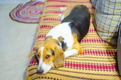 Trauriger Hund, der auf der Couch liegt Stockbild