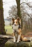 Trauriger Hund, der auf einem Stein sitzt Stockbilder