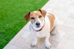 Trauriger Hund, der am Boden im Freien sitzt stockfoto