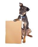 Trauriger Hund, der leeres Pappzeichen hält Lizenzfreies Stockfoto