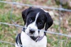 Trauriger Hund hinter einem Zaun Lizenzfreies Stockbild