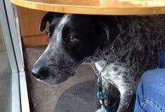 Trauriger Hund unter Tabelle stockfotografie