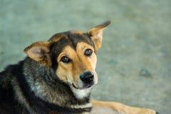 Trauriger Hund, untersuchend die Kamera Lizenzfreie Stockfotos
