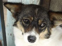 Trauriger Hundeblick Stockfotografie