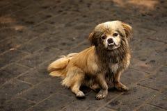 Trauriger kleiner chinesischer Hund lizenzfreies stockbild