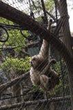 Trauriger lustiger Affe innerhalb des Käfigs Lizenzfreies Stockfoto