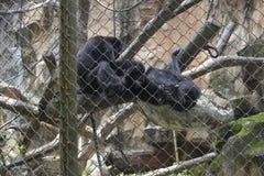 Trauriger lustiger Affe innerhalb des Käfigs Lizenzfreie Stockbilder