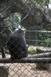 Trauriger lustiger Affe innerhalb des Käfigs Lizenzfreies Stockbild