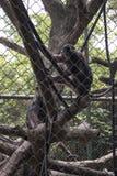 Trauriger lustiger Affe innerhalb des Käfigs Lizenzfreie Stockfotografie