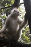 Trauriger lustiger Affe innerhalb des Käfigs Stockfotografie