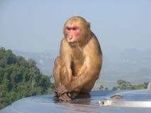 Trauriger nachdenklicher Affe auf einen Berg Stockbild