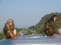 Trauriger nachdenklicher Affe auf einen Berg Stockfoto