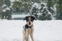 Trauriger Nomenhund in einem kalten Wetter des verschneiten Winters Lizenzfreie Stockfotos