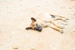 Trauriger obdachloser Hund Lizenzfreie Stockfotos