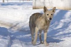 Trauriger obdachloser Hund an einem Wintertag Stockfotos