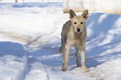 Trauriger obdachloser Hund an einem Wintertag Lizenzfreie Stockbilder