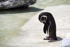 Trauriger Pinguin Lizenzfreie Stockfotografie