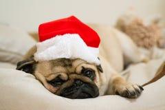 Trauriger Pug Stockbilder