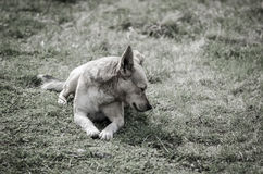 Trauriger puppu Hund stockbild