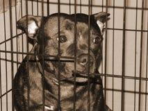 Trauriger reinrassiger Hund in einem Käfig, stilisierter Sepia Lizenzfreie Stockfotografie