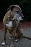 Trauriger Rettungshund Lizenzfreie Stockbilder