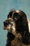 Trauriger süßer Hund Stockfoto