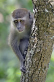 Trauriger schauender Affe im Baum Stockfotos