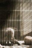 Trauriger Schimpanse in einem Käfig lizenzfreie stockfotos