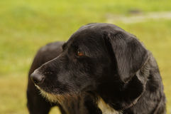 Trauriger schwarzer Hund Lizenzfreie Stockfotos