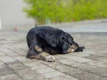Trauriger und alter obdachloser hungriger schwarzer Hund, der in den Stadtvororten schläft stockfotos