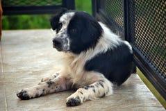 Trauriger und heimatloser Hund Lizenzfreie Stockfotografie
