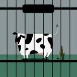 Trauriger Viehbestand schüchtern in der Gefangenschaft ein stock abbildung