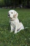 Trauriger weiblicher Spürhund, der in einen Park wartet Stockfotos