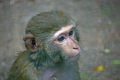 Trauriges Gesicht eines Affen mit hellen Augen Lizenzfreies Stockfoto