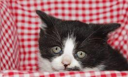 Trauriges Kätzchen Lizenzfreies Stockbild