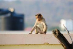 Trauriges mokey sitzt auf dem Stadtgebäudedach Lizenzfreies Stockfoto