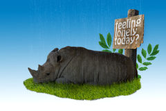 Trauriges Nashorn Stockbild