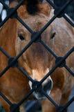 Trauriges Pferd Lizenzfreie Stockbilder