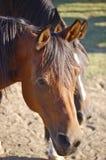 Trauriges Pferd auf dem Bauernhof Lizenzfreie Stockfotografie