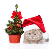 Trauriges schottisches Kätzchen mit rotem Sankt-Hut- und -weihnachtsbaum Stockfotografie