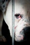Trauriges Weiß und Hund hinter Gitter Stockbilder