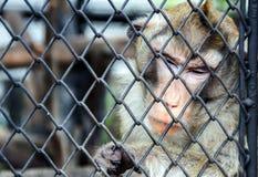Traurigkeit emotional vom Affegesicht hinter dem Käfig Lizenzfreie Stockfotos
