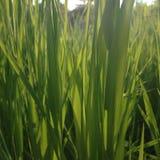 A través de la hierba Imagen de archivo