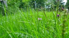 A través de la hierba en el prado almacen de video