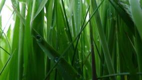 A través de la hierba - 4K metrajes
