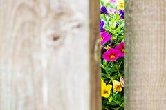 A través de la puerta Fotografía de archivo libre de regalías