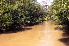A través de la selva tropical del Amazonas Imagen de archivo libre de regalías