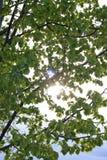 A través de las hojas Imagen de archivo libre de regalías