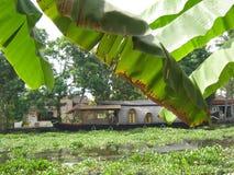 A través de los árboles de plátano Fotos de archivo libres de regalías