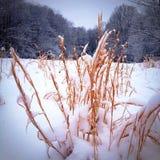 A través de los drygrass Imagen de archivo